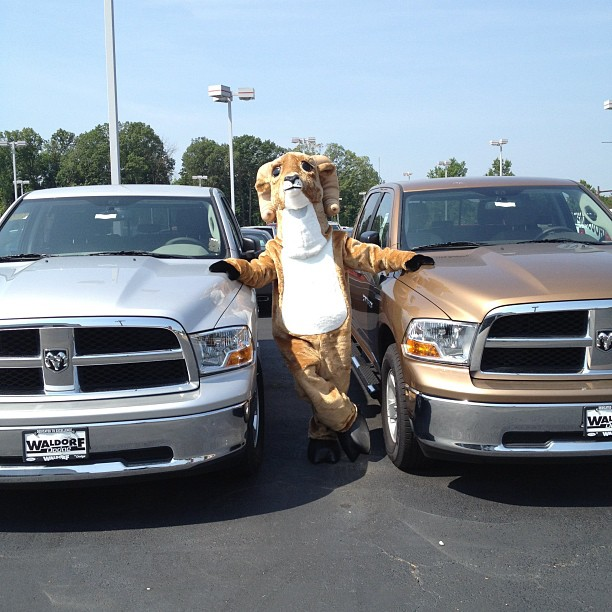 Rami the mascot with 2013 Ram 1500s